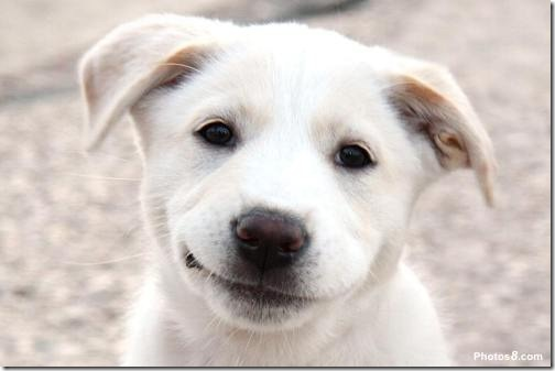 Smiling-Puppy